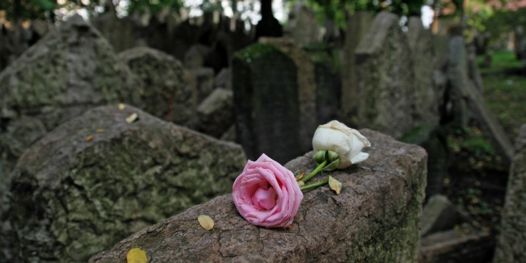 pink and white rose laying on tombstone